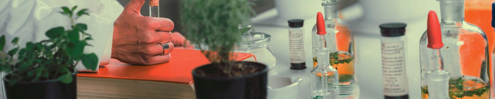 GLOSAR PLANTE MEDICINALE